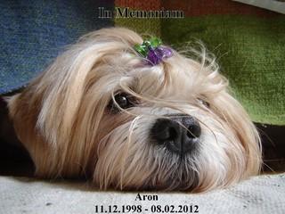 In Memoriam: Aron